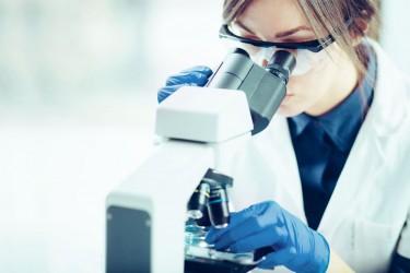 Pesquisa descobre como mastigação afeta esmalte dos dentes em nanoescala